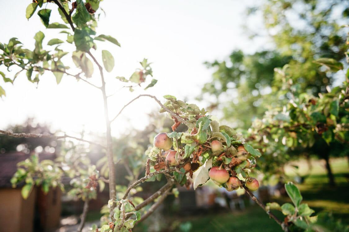 Hochzeit Burgenland Garten Alternativ Sfinks Bauernhof 40